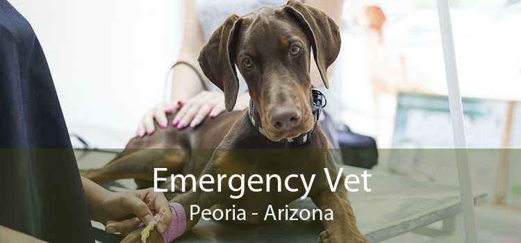 Emergency Vet Peoria - Arizona