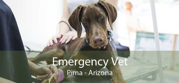 Emergency Vet Pima - Arizona