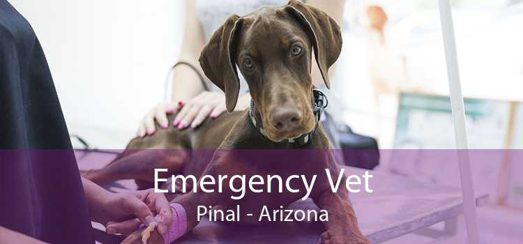 Emergency Vet Pinal - Arizona