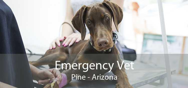 Emergency Vet Pine - Arizona