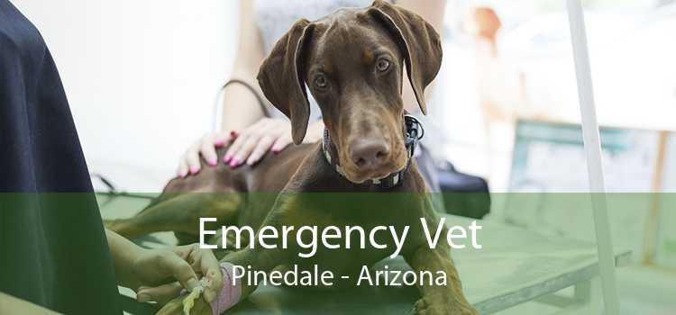 Emergency Vet Pinedale - Arizona