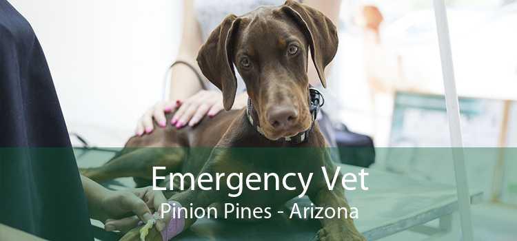 Emergency Vet Pinion Pines - Arizona