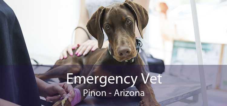Emergency Vet Pinon - Arizona