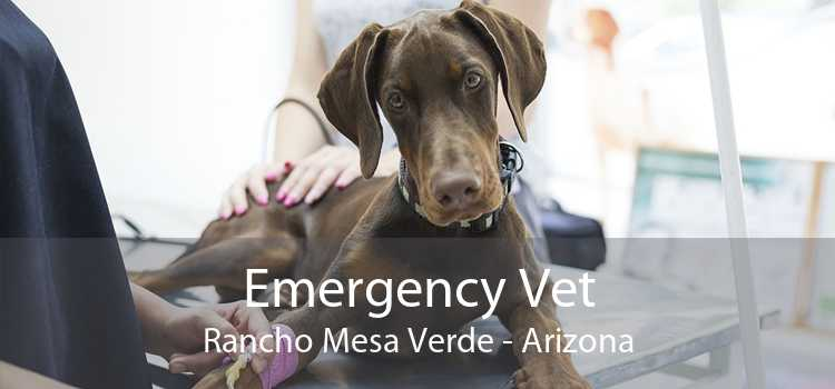 Emergency Vet Rancho Mesa Verde - Arizona