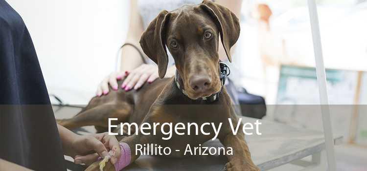 Emergency Vet Rillito - Arizona