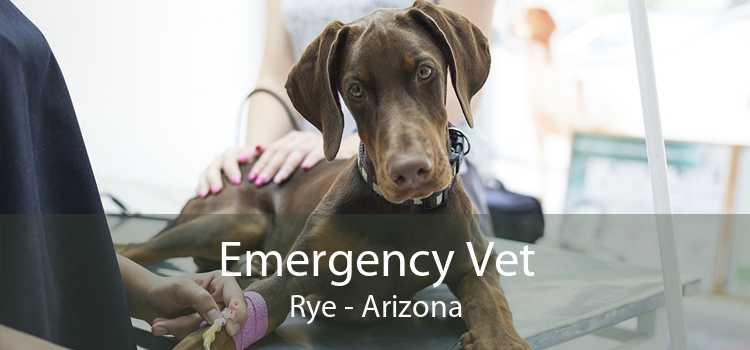 Emergency Vet Rye - Arizona
