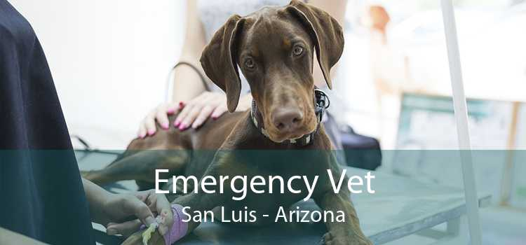 Emergency Vet San Luis - Arizona