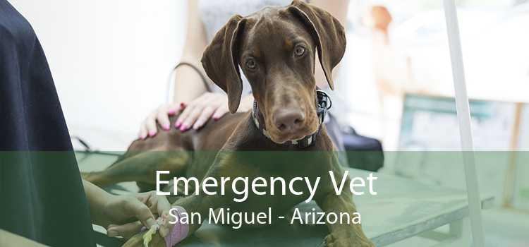 Emergency Vet San Miguel - Arizona