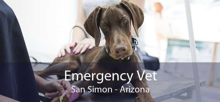 Emergency Vet San Simon - Arizona