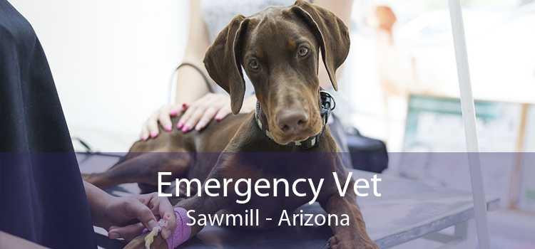 Emergency Vet Sawmill - Arizona