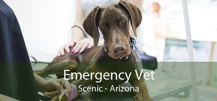 Emergency Vet Scenic - Arizona