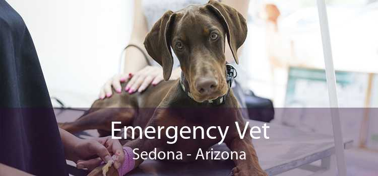 Emergency Vet Sedona - Arizona