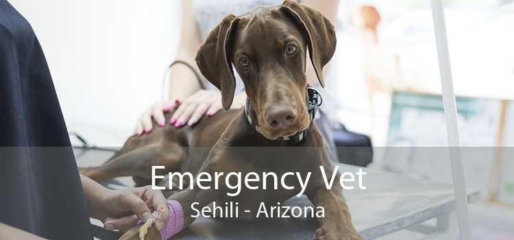 Emergency Vet Sehili - Arizona