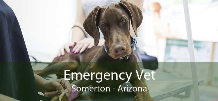 Emergency Vet Somerton - Arizona