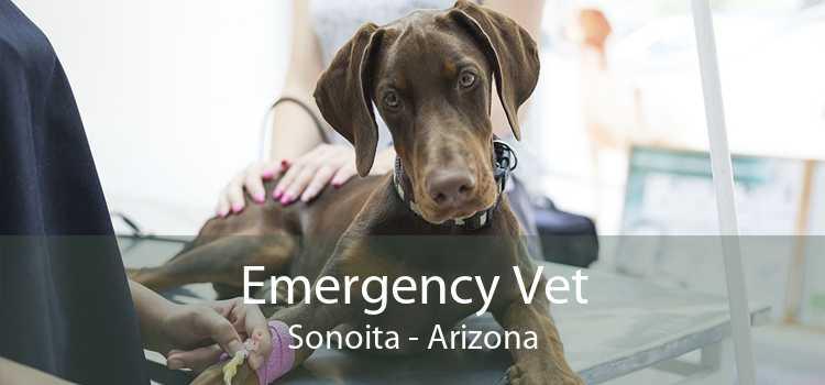 Emergency Vet Sonoita - Arizona