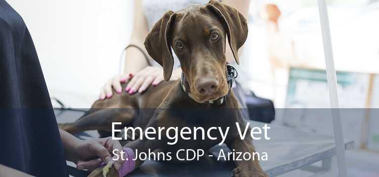 Emergency Vet St. Johns CDP - Arizona