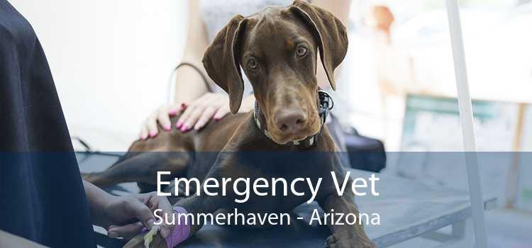 Emergency Vet Summerhaven - Arizona