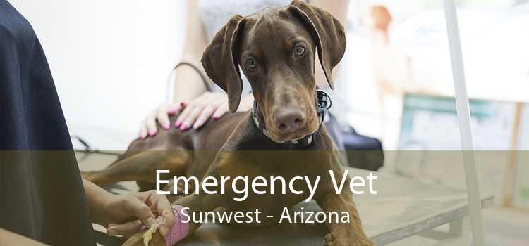 Emergency Vet Sunwest - Arizona