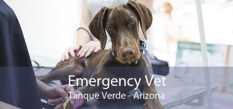 Emergency Vet Tanque Verde - Arizona