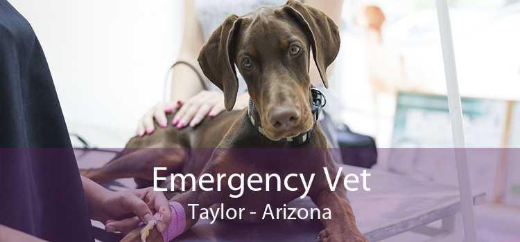Emergency Vet Taylor - Arizona
