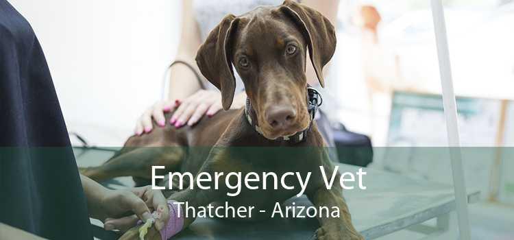 Emergency Vet Thatcher - Arizona