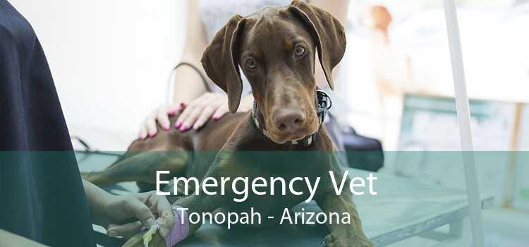Emergency Vet Tonopah - Arizona