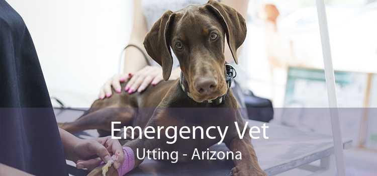 Emergency Vet Utting - Arizona