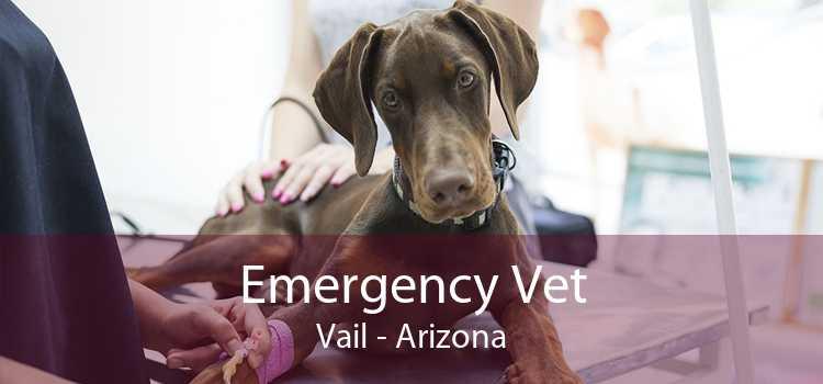 Emergency Vet Vail - Arizona