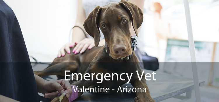 Emergency Vet Valentine - Arizona