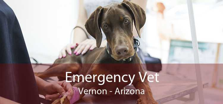 Emergency Vet Vernon - Arizona