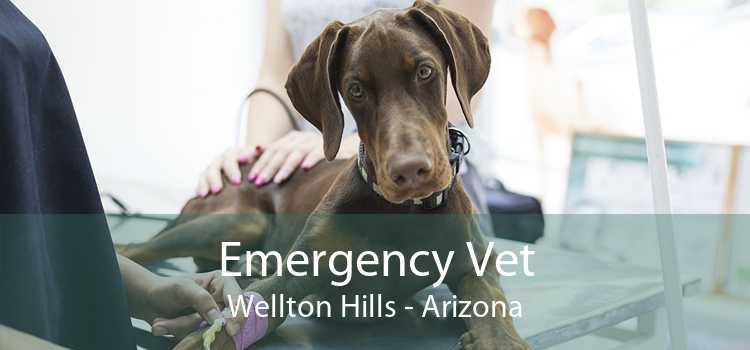 Emergency Vet Wellton Hills - Arizona