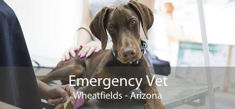 Emergency Vet Wheatfields - Arizona