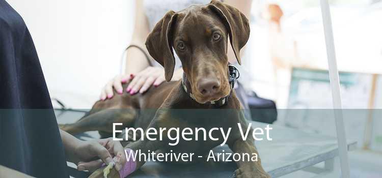Emergency Vet Whiteriver - Arizona