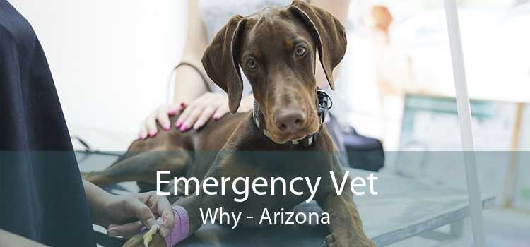 Emergency Vet Why - Arizona