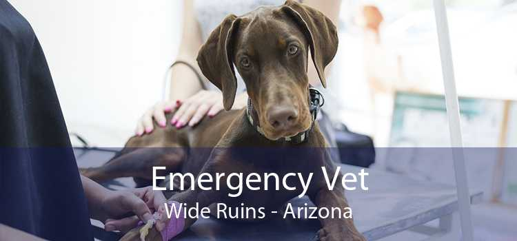 Emergency Vet Wide Ruins - Arizona
