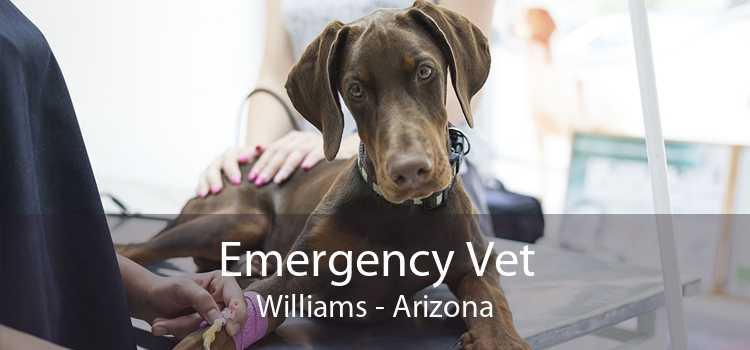 Emergency Vet Williams - Arizona