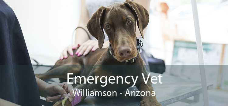 Emergency Vet Williamson - Arizona