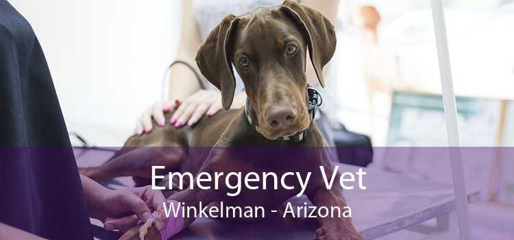 Emergency Vet Winkelman - Arizona