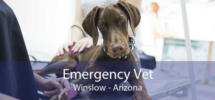 Emergency Vet Winslow - Arizona