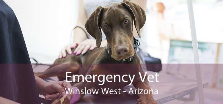 Emergency Vet Winslow West - Arizona