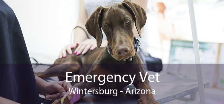 Emergency Vet Wintersburg - Arizona