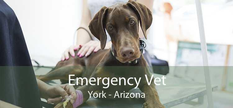 Emergency Vet York - Arizona