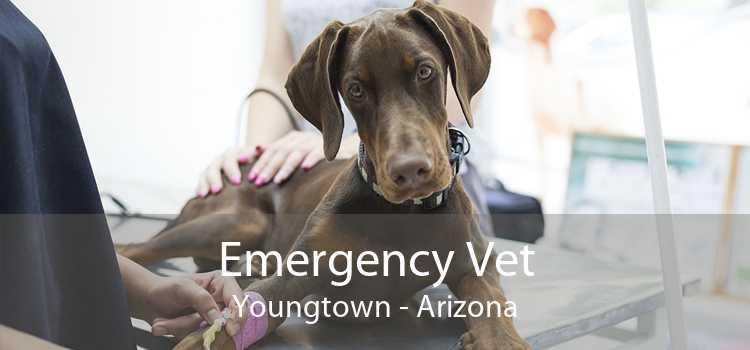 Emergency Vet Youngtown - Arizona