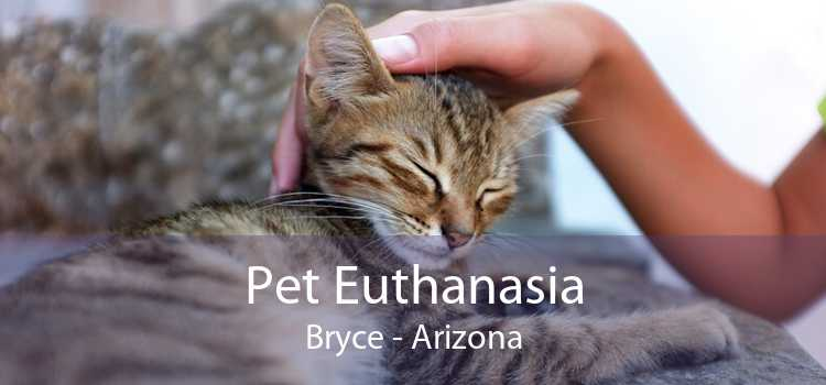 Pet Euthanasia Bryce - Arizona