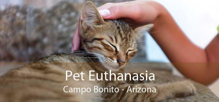 Pet Euthanasia Campo Bonito - Arizona