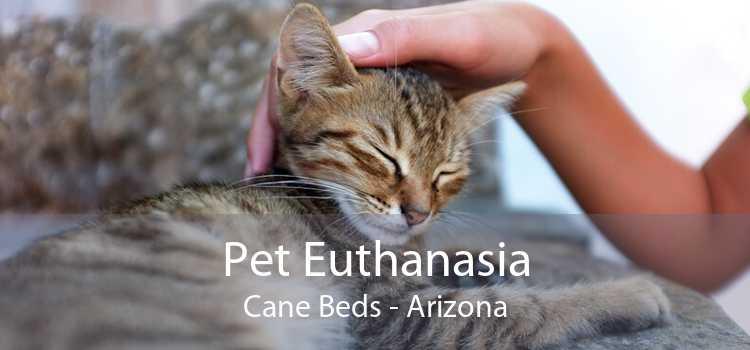 Pet Euthanasia Cane Beds - Arizona