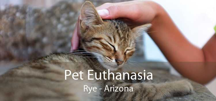 Pet Euthanasia Rye - Arizona