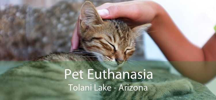 Pet Euthanasia Tolani Lake - Arizona