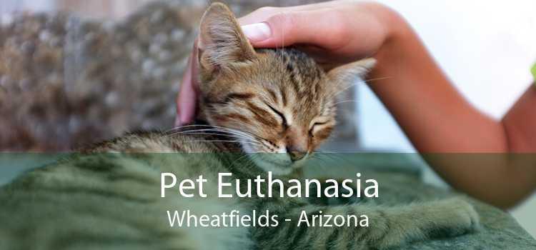 Pet Euthanasia Wheatfields - Arizona