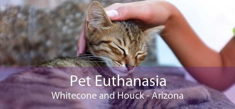 Pet Euthanasia Whitecone and Houck - Arizona
